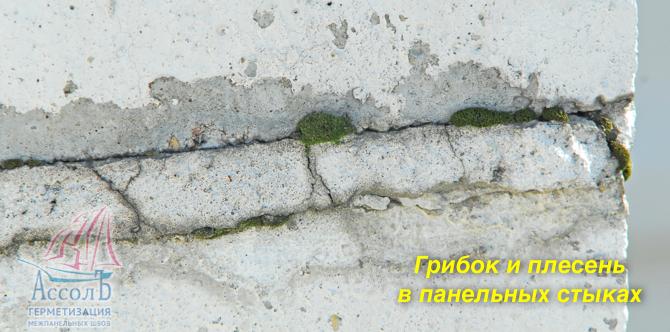плесень разрушает бетон