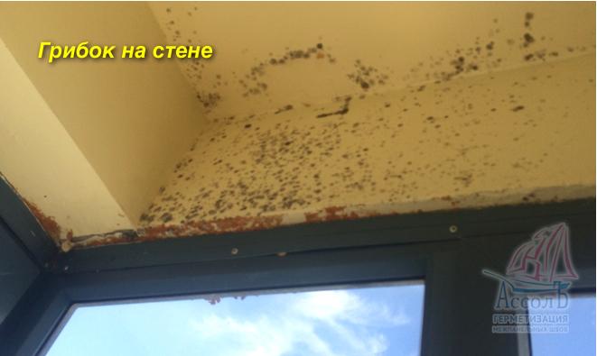 грибок на стене из за плохой вентиляции