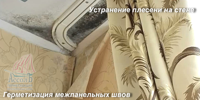 Разве плесень на стене опасна?